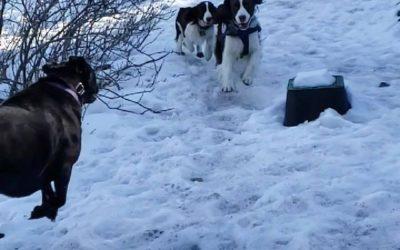 A little snow play!