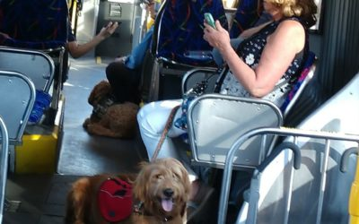 Huckleberry's one of our youngest Team members and he rode the bus like a real t…