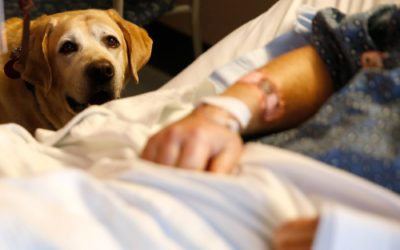 Therapy Dogs Work Miracles. But Do They Like Their Jobs?