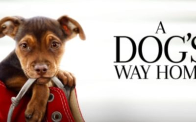 Worth seeing with a lovely therapy dog connection!
