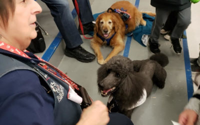 Hundreds of kids today at the local elementary school learned how to pet a stran…