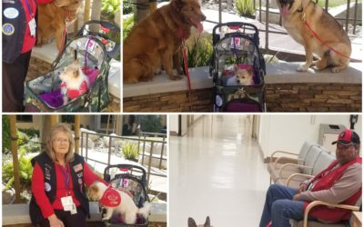 Bear, Sadie Ann, and Sasha visited the palliative care unit today at the VA. In …