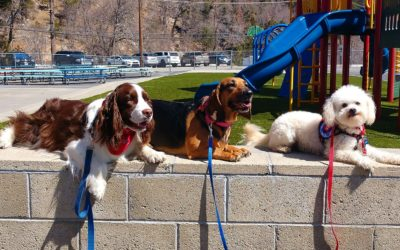 Three dog friends – hanging out between groups of kids at CHE.