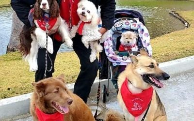 Douglas McCrory with all of our pups at the VA on Sunday. Such a rewarding place…
