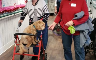 When our dogs participant in physical therapy, patients are more motivated to ha…